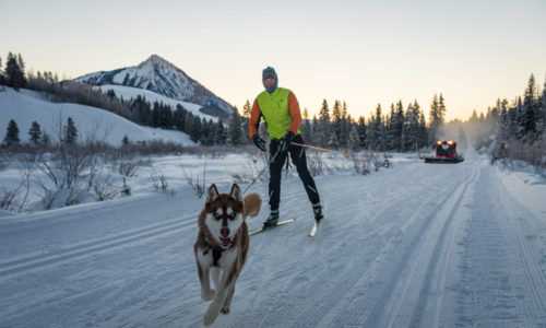 Nordic Skiing with Dogs in Crested Butte
